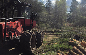 Forestry machinery harvesting UK-grown timber