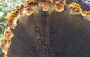 Fungi growing on a felled tree marked 'RIP old friend'