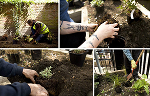 People planting trees and shrubs in a city garden
