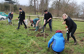 A community digging to plant fruit trees for an orchard