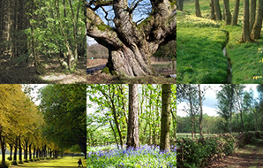 Ancient trees, native woodland and wildlife in need of better protection