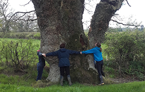 Three people hand in hand hugging an enormous ancient tree