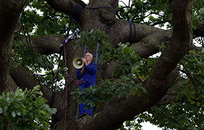 Tree climber with a loud speaker in the boughs of a veteran tree