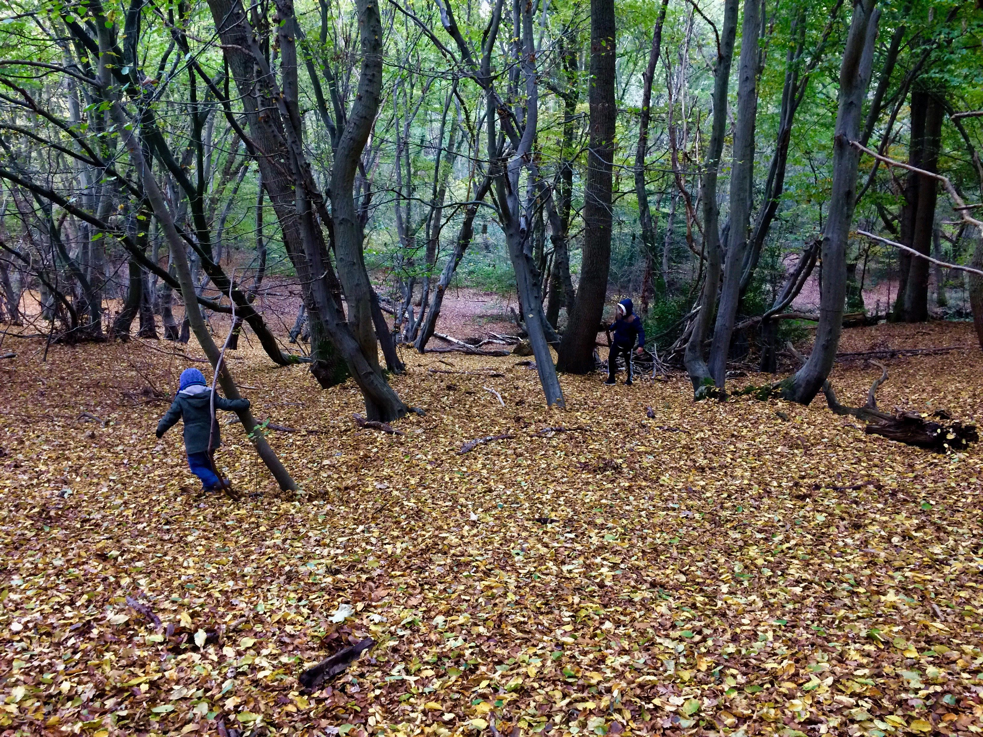Small child playing in a woodland carpeted with fallen leaves
