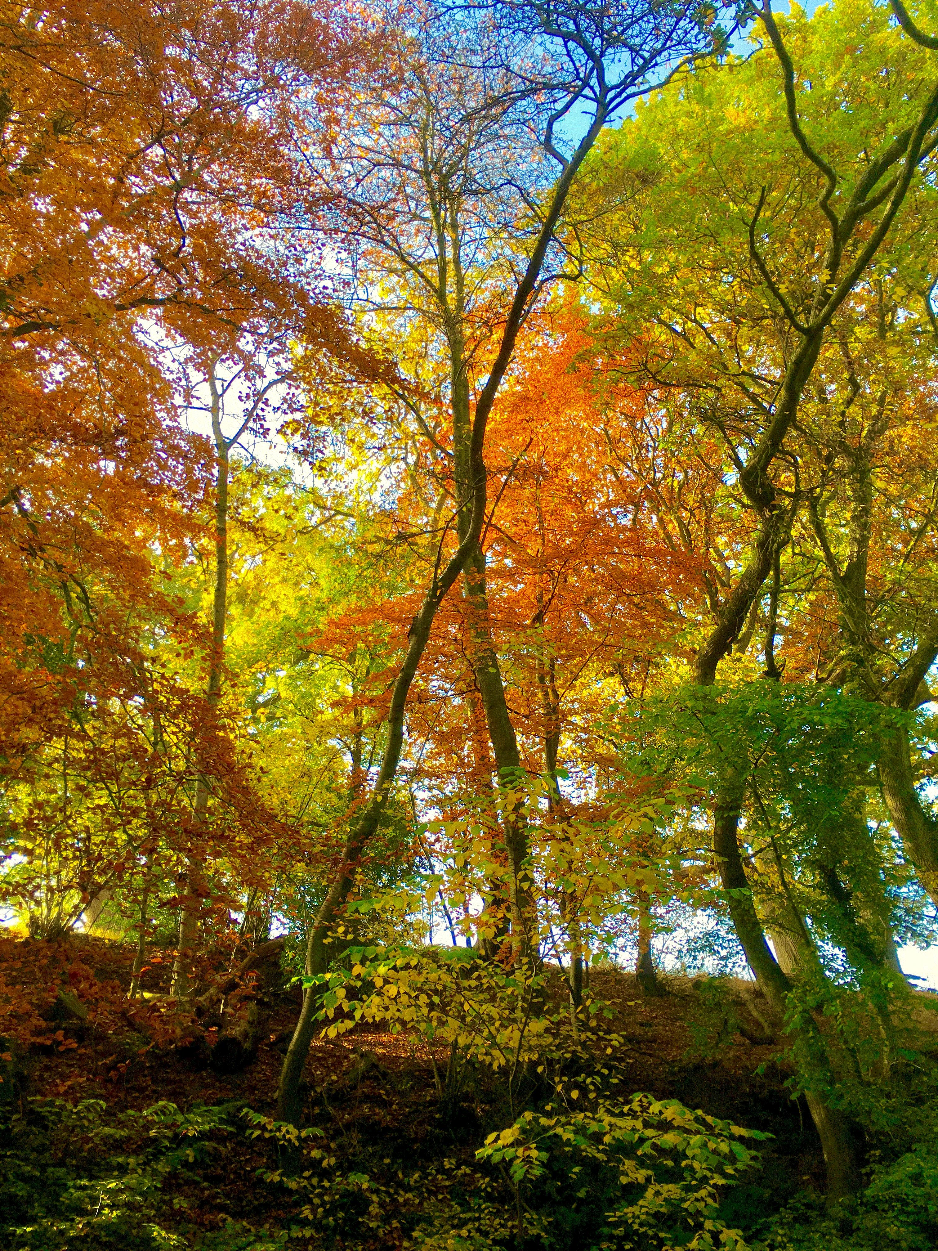 Orange, yellow and green leaves on autumn trees