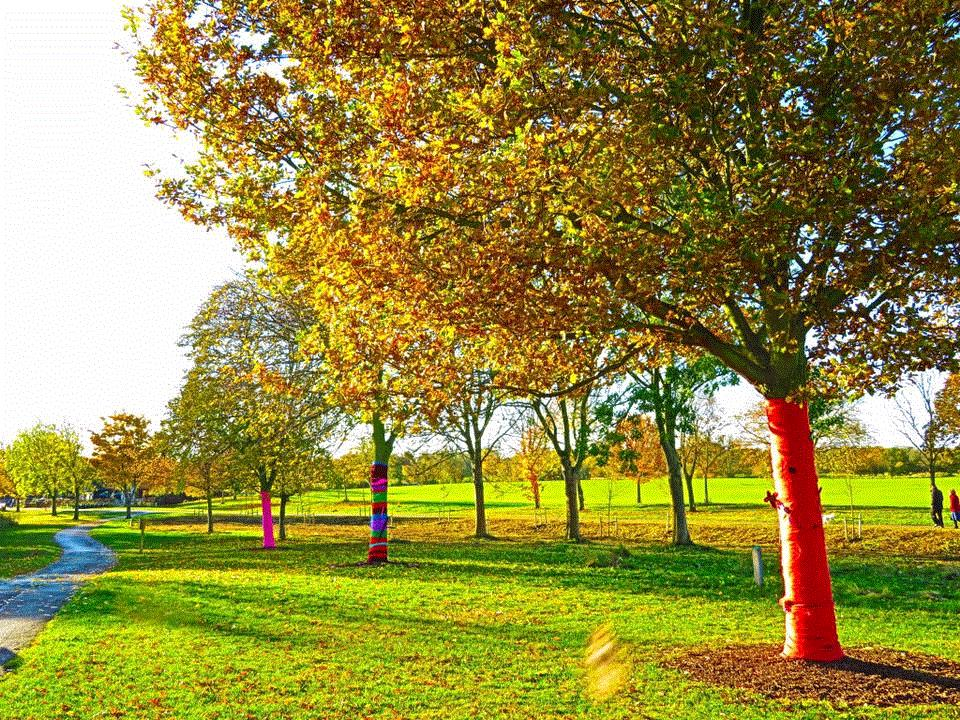 Park trees wrapped in colourful dressings