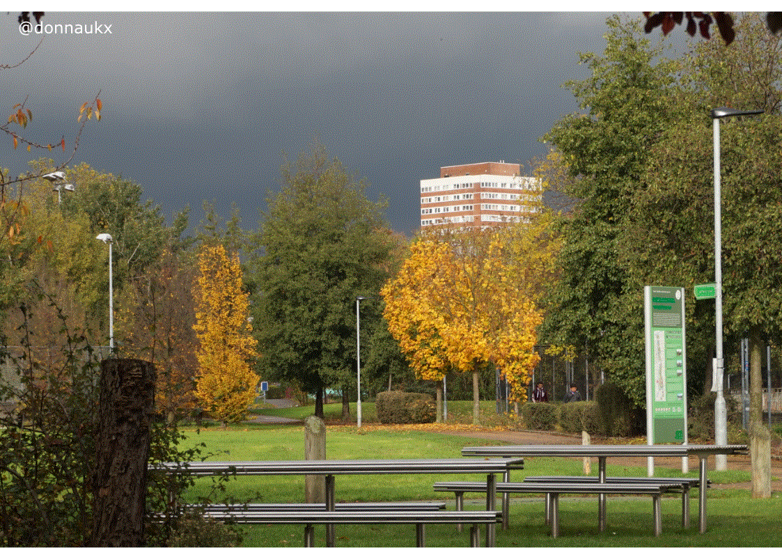 Urban park trees in front of high rise flats