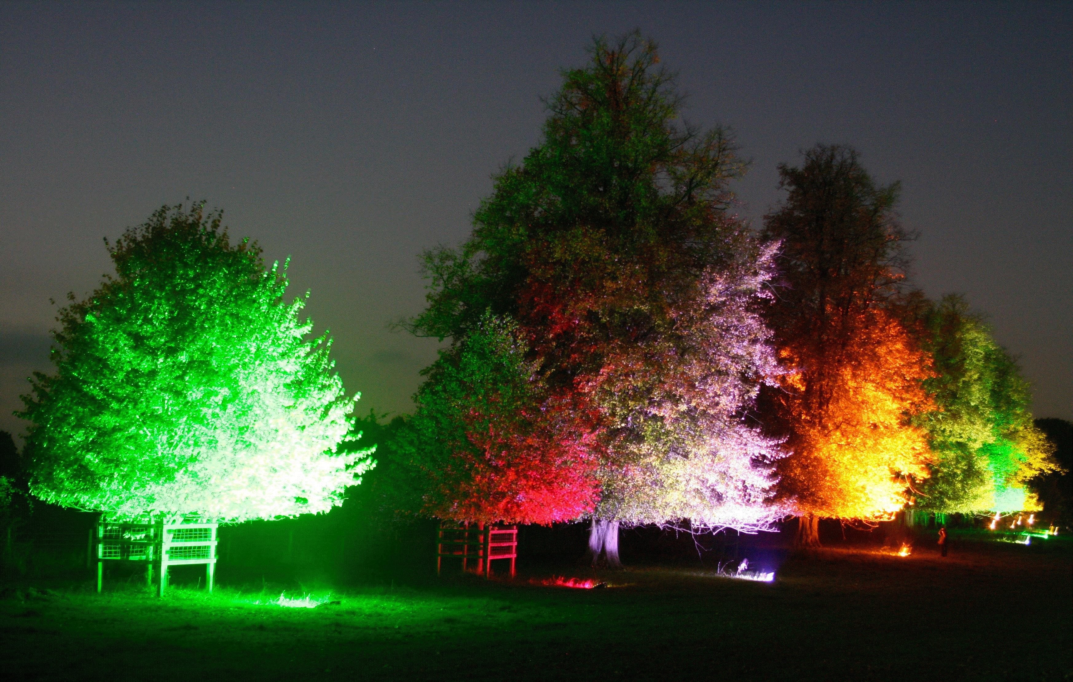 Mature trees at night lit up by coloured lights