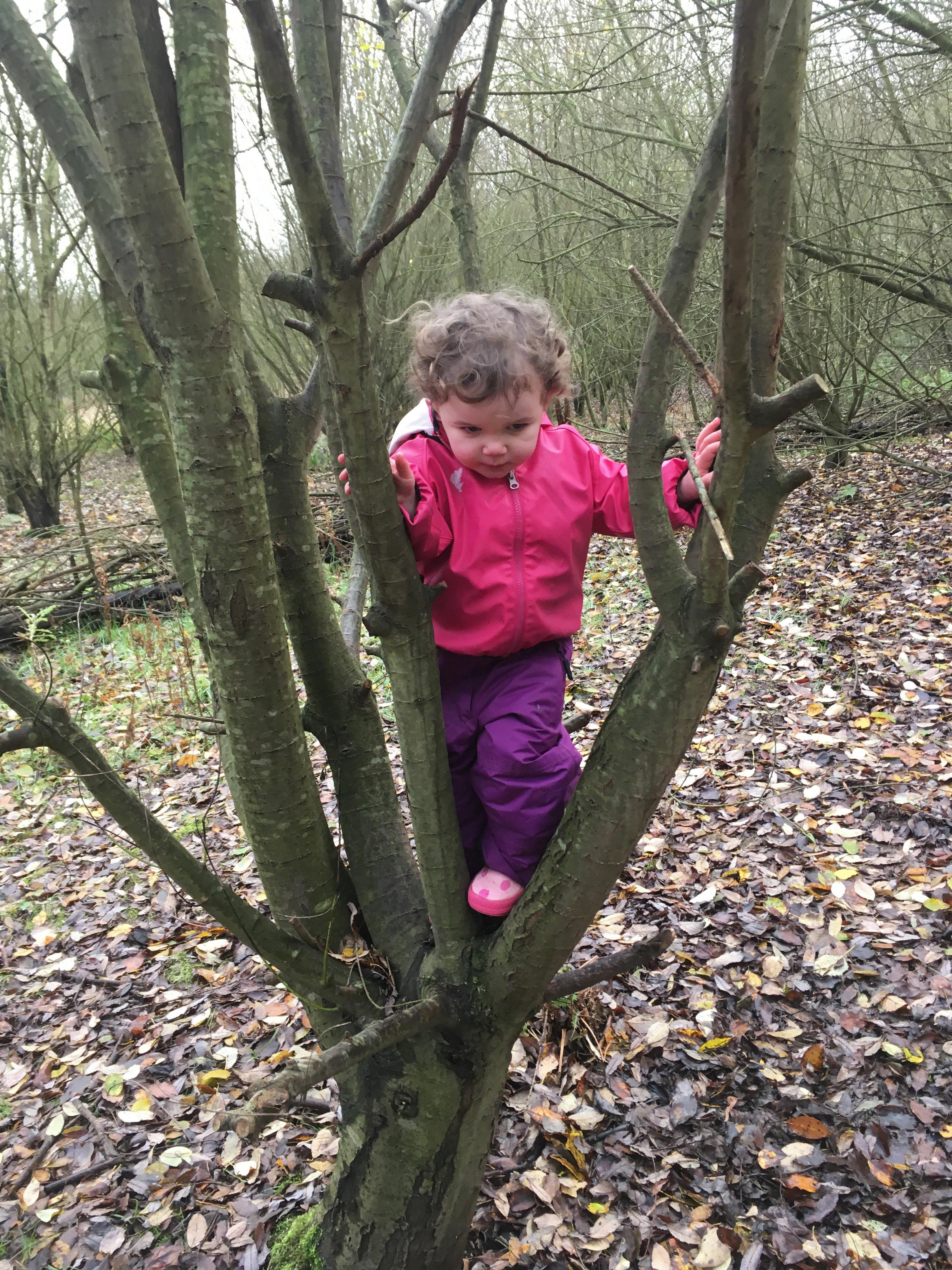 Small girl in a pink anorak climbing a tree