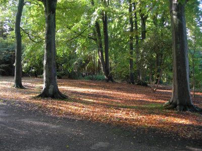 Parkland trees in dappled sunlight